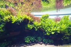 Decorative aquarium Royalty Free Stock Images
