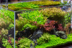 Decorative aquarium with plant from glass Stock Image