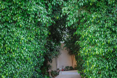Decorative arch with green leaves Royalty Free Stock Images