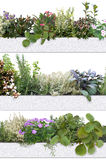 Decorative and aromatic herbs and flowers Royalty Free Stock Images