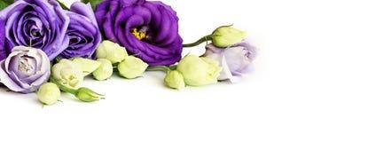 Decorative arrangement of eustoma flowers. On white background Stock Images