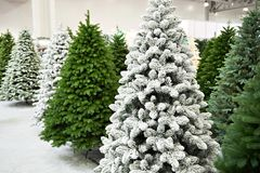 Decorative Artificial Christmas Trees In Store Royalty Free Stock Photography