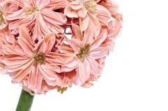 Decorative Artificial Flower Stock Photos