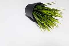 Decorative artificial green grass in plastic pot isolated on white background royalty free stock photography