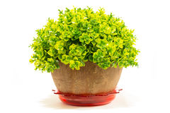 Decorative artificial tree in flowerpot isolated Royalty Free Stock Photos