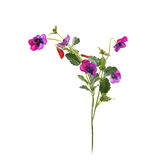 Decorative artificial violet flower with leaves Royalty Free Stock Image