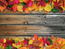 Decorative autumn background Royalty Free Stock Images