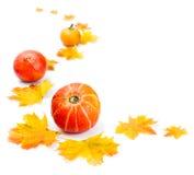 Decorative Autumn border Stock Photos