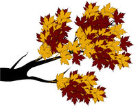 Decorative Autumn Branch Tree Silhouette With Brown Leaves. Full colour Royalty Free Stock Photo