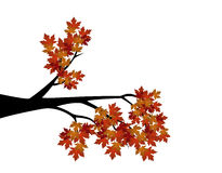 Decorative Autumn Branch Tree Silhouette With Brown Leaves. Full colour Stock Images
