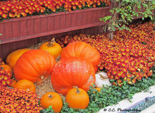 Decorative Autumn Display Royalty Free Stock Photography