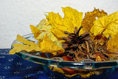 DECORATIVE AUTUMN LEAVES Royalty Free Stock Images