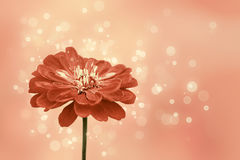 Decorative background with a flower Royalty Free Stock Images