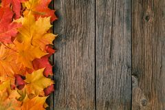 Decorative background frame from fall maple leaves Stock Photos