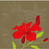 Decorative background with Hibiscus flowers Royalty Free Stock Images