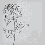 Decorative background with rose flower Royalty Free Stock Photo