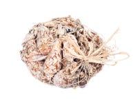 Decorative bag of bat volute sea shell Royalty Free Stock Photos