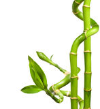 Decorative bamboo Stock Photo