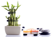 Decorative Bamboo Stock Photography