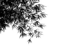Decorative bamboo branches. Decorative bamboo branches isolated on white background Stock Photos