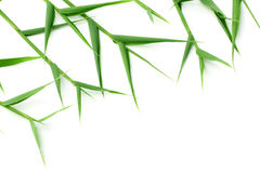 Decorative bamboo leaves Royalty Free Stock Photos