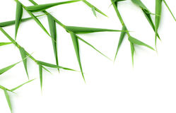Decorative bamboo leaves Royalty Free Stock Photo