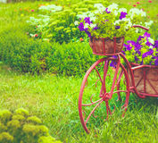 Decorative Bicycle In Garden Stock Photo