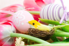 Decorative bird in a nest over easter background Stock Images