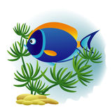 Decorative blue fish. Background with decorative tang fish and plant Royalty Free Stock Images