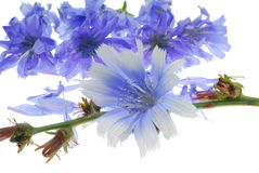 Decorative blue flowers Stock Photo