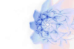 Decorative blue pink geometric floral sketch on white rectangular background stock photo