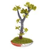 Decorative bonsai plant in the pot Stock Photo