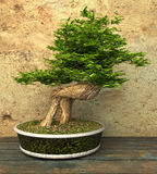 Decorative Bonsai Tree Royalty Free Stock Image