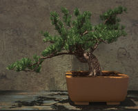 Decorative Bonsai Tree Stock Images