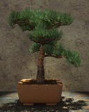 Decorative Bonsai Tree Stock Photos