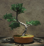 Decorative Bonsai Tree Stock Photo