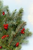 A decorative bouquet of Christmas tree branches collected in a mitten with cranberries on a blue background stock images