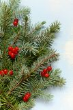 A decorative bouquet of Christmas tree branches collected in a mitten with cranberries on a blue background royalty free stock photo