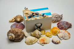 Decorative box with shells Royalty Free Stock Images
