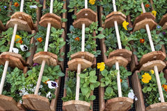 Free Decorative Boxes Of Annuals Stock Photo - 34203240
