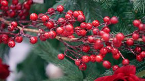 Decorative branch with red berries. 4k Video 3840x2160 royalty free stock images