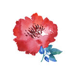 Decorative bright red floral watercolor illustration. Royalty Free Stock Photos