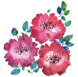 Decorative bright red floral watercolor illustration. Stock Images