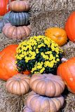 Decorative bumpy gourd for Fall season Royalty Free Stock Images