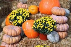 Decorative bumpy gourd stock image