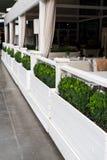 Decorative bush decorate the veranda. Decorative bushes on the veranda in summer stock image