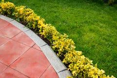 Decorative bushes near the path royalty free stock image