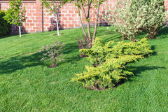 Decorative bushes and trees on manicured lawn Royalty Free Stock Photo