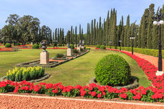 Decorative bushes trimmed and shaped flowers planted. In a city park Stock Photos