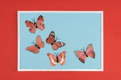 Decorative butterflies. In a white frame on a colored background Stock Photography